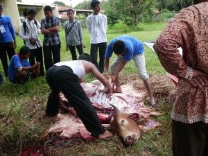 Perkumpulan remaja SMA Mosa 2 Arun Lhokseumawe sedang melakukan penyembelihan hewan kurban di SMA Modal Bangsa Arun